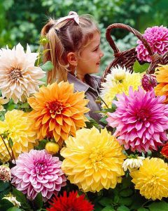Dinnerplate Dahlias coming at the end of the month